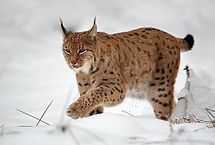 Autor: Martin Mecnarowski (http://www.photomecan.eu/) – Vlastní dílo, CC BY-SA 3.0, https://commons.wikimedia.org/w/index.php?curid=12690964