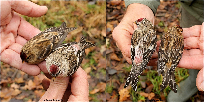 Moravský ornitologický spolek
