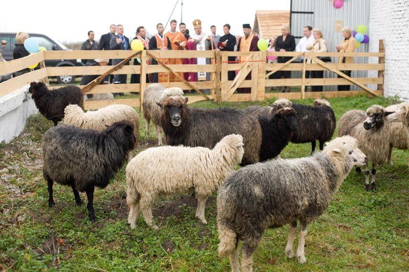 mistni biskup zehna ovci farme